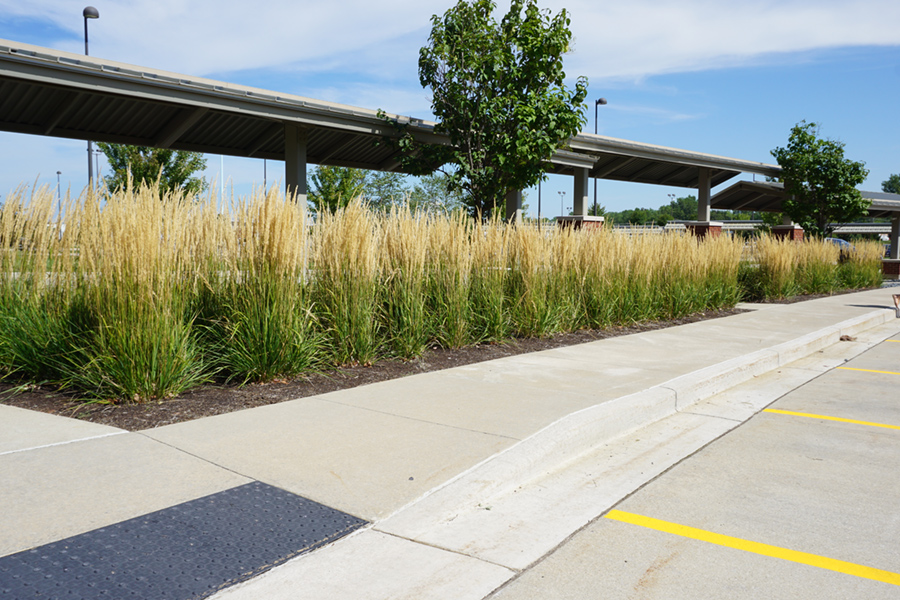 naturalized grass and tree planting to soften urban parking lot